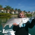 Redfish Tampa Bay