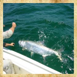 InshoreCharters Tampa Charter Fishing Boat